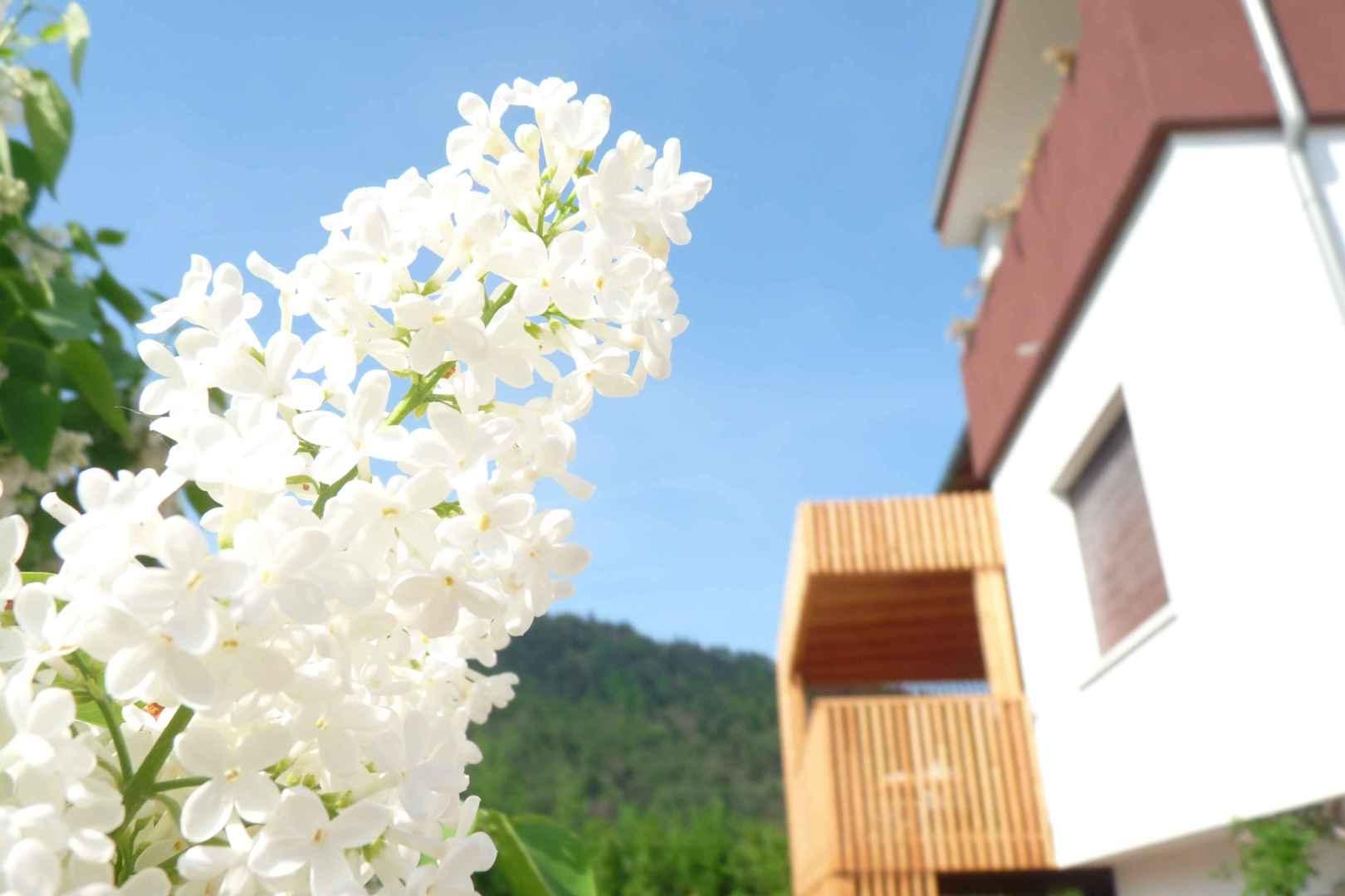 i fiori del giardino del b&b casa sul lago casa sul lago appartamenti sul lago di caldonazzo trentino