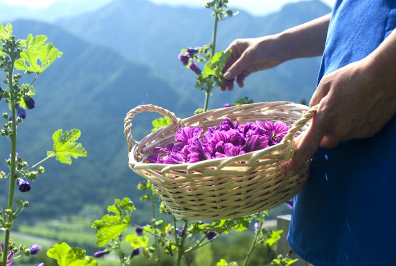 festival dei fiori levico terme raggiungibile dal beb casa sul lago appartamenti per vacanze sul lago di caldonazzo trentino